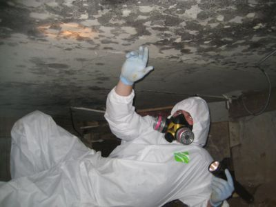 Twip Of The Day Identifying Crawl Space Mold Mar Flex