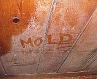 Moldly Rotting Crawl Space
